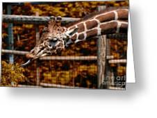 Giraffe Showing His 20 Inch Tongue Greeting Card