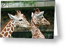 Giraffes-09023 Greeting Card