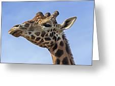 Giraffes 3 Greeting Card
