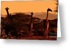 Giraffes At Sundown Greeting Card