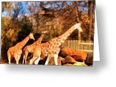 Giraffes At The Zoo Greeting Card
