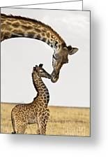 Giraffe's First Kiss Greeting Card