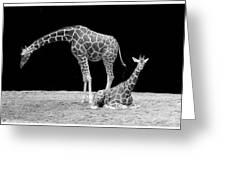 Giraffe's Greeting Card