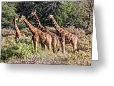 Giraffes Galore Greeting Card