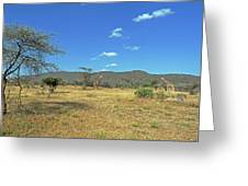 Giraffes In Samburu National Reserve Greeting Card