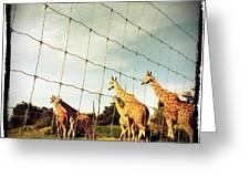 Giraffes Leave Greeting Card