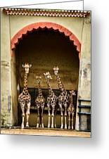 Giraffes Lineup Greeting Card