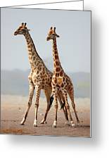 Giraffes Standing Together Greeting Card by Johan Swanepoel