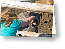 Girl Pets Donkey Greeting Card