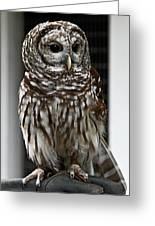 Give A Hoot Greeting Card by John Haldane