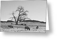 Give Me A Home Where The Buffalo Roam Bw Greeting Card