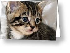 Gizmo The Kitten Greeting Card