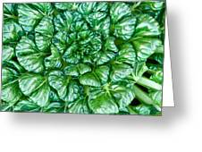 Glabrous Leaves Greeting Card