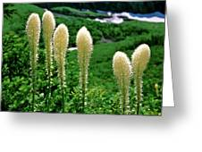 Glacier Beargrass Swiftcurrent Pass Greeting Card
