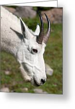 Glacier Goat Greeting Card