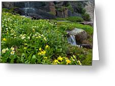 Glacier Lilies And Globeflower Beside A Mountain Stream Greeting Card