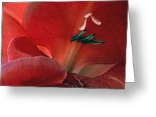 Gladiola IIi Greeting Card
