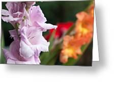 Gladiolus Bouquet Greeting Card