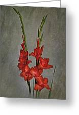 Gladiolus I Greeting Card