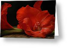 Gladiolus II Intimate Greeting Card