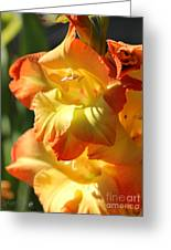 Gladiolus Named Halloween Greeting Card