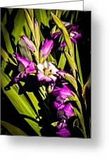 Gladiolus Greeting Card