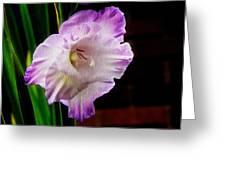 Gladiolus - Summer Beauty Greeting Card