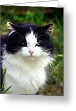 Glaring Cat Greeting Card