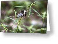 Glass-wing Butterfly Greeting Card