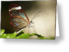 Glassed Wing Tropical Butterfly Greeting Card