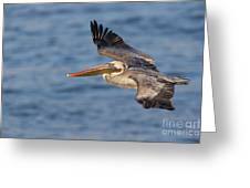 gliding by Pelican Greeting Card