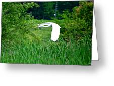 Gliding Egret Greeting Card