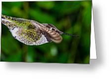 Gliding Hummingbird Greeting Card