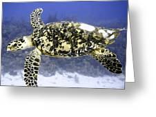Gliding Sea Turtle Greeting Card