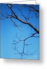 Glimmering Branches Greeting Card by Susan Hernandez
