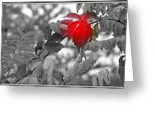Glimpse Of Autumn Red Greeting Card