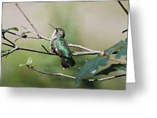 Glistening Hummer Greeting Card