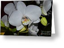 Glistening White Pedals Greeting Card
