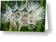 Glittering In The Grass Greeting Card