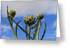 Globe Artichokes Greeting Card