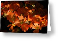 Globe-mallow Blooms  Greeting Card