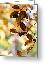 Glorious Foliage. Tree In Pamplemousse Garden 1. Mauritus Greeting Card