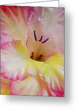 Glorious Gladiola Flower Greeting Card