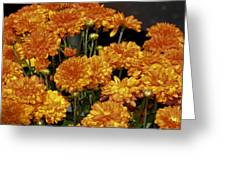 Glorious Golden Mums Greeting Card