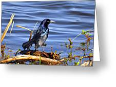 Glorious Grackle Greeting Card