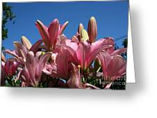 Glorious Lilies  Greeting Card
