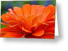 Glorious Orange  Greeting Card