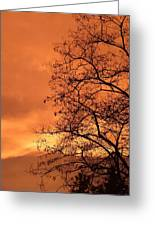 Glorious Silhouettes 1 Greeting Card