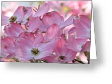 Glorious Spring Dogwood Greeting Card