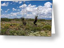 Glorious Spring In The Desert Greeting Card